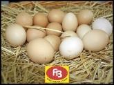 Venta al por mayor de pollos en sierra de guadarrama, Venta al por mayor de pollos en villalba