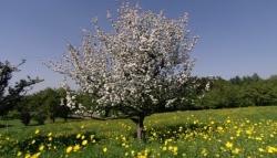 El Escorial celebrará el Día del Árbol plantando 20 nuevos ejemplares en Las Suertes