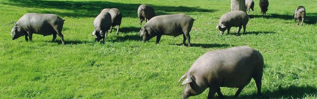 Manjares de la dehesa - Ibéricos y carnes a la parrilla