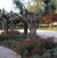 El Ayuntamiento recaba la opinión de la ciudadanía para mejorar zonas verdes y arbolado viario