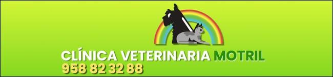 clinicas veterinarias en motril, pa´bichitos en motril, veterinarios en motril, peluqueria canina en motril, pienso para mascotas en motril, clinicas