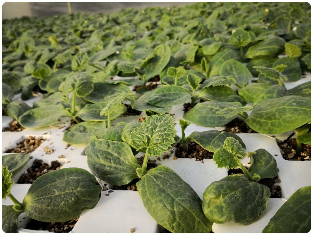 agricultura ecologica en motril, agricultura ecologica motril, agricultura ecologica salobreña,
