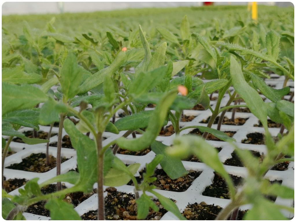 agricultura ecologica almuñecar, agricutura ecologica en granada, semilleros en granada, semilleros