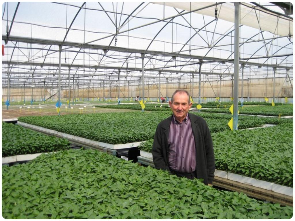 semilleros en salobreña, semilleros en almuñecar, semilleros motril, huertos en motril, semillas