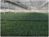 plantas horticolas en motril, cultivo ecologico certificado en motril, semillas en motril, plantas