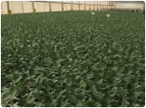 plantas en motril, horticultura en motril, injertos en motril, UNE ISO 9001 en motril, injertos