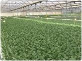 Asociación de Semilleros Hortícolas en motril, asehor en motril, cultivo ecologico en salobreña,