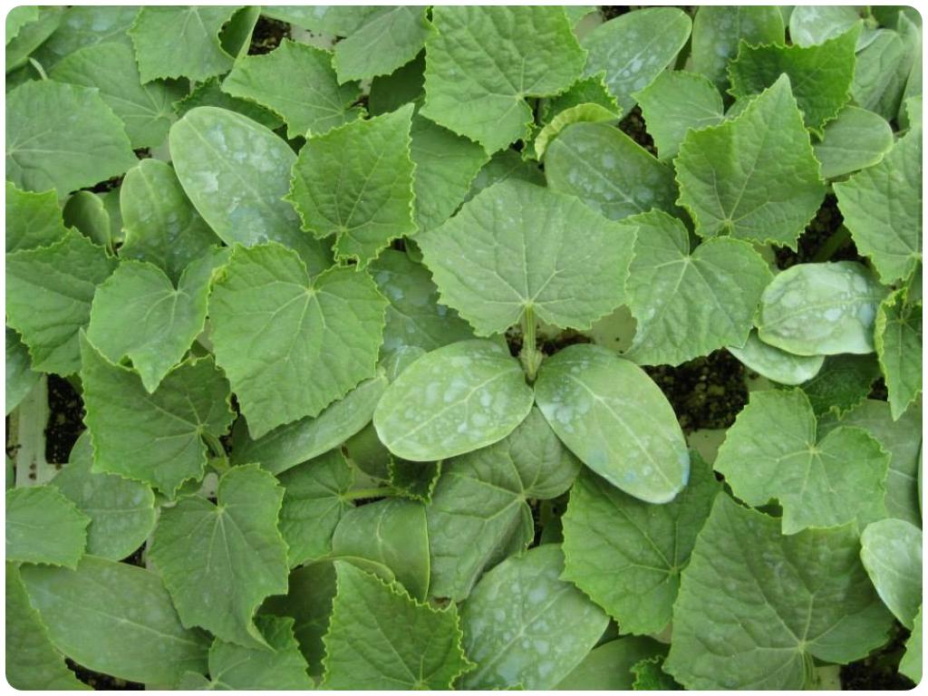 cultivo ecologico en motril, cultivo libre de pesticidas en motril, agricultores en motril, semill