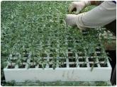 guisantes en motril, coliflores en motril, brocoli en motril, puerros en motril, productos ecologico