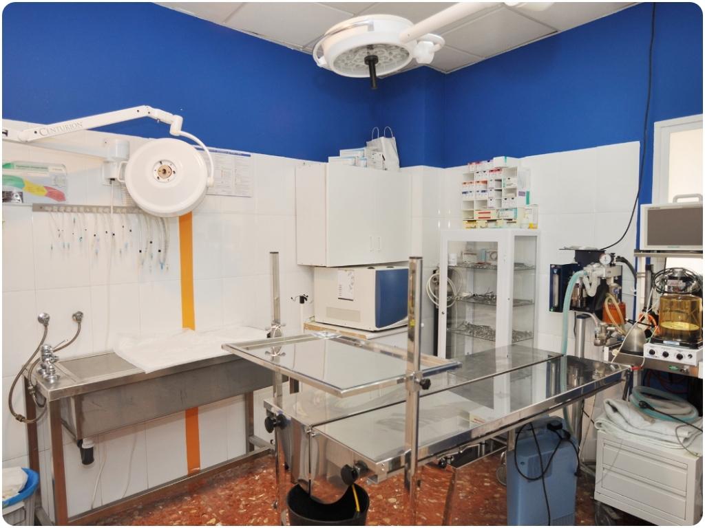 extracciones y pulidos dentales en motril, animales de compañia en motril, gatos en motril,