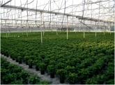 viveros en granada, plantas en motril, plantas en salobreña, plantas en almuñecar, plantas granada