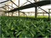 plantas decorativas en motril, plantas de interior en motril, plantas de exterior en motril, flores