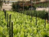 invernaderos en almuñecar, invernaderos en granada, venta de plantas en motril, plantas granada