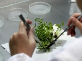 plantas ornamentales en almuñecar, plantas ornamentales en granada, plantas granada