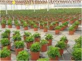 plantas de interior en motril, plantas de exterior en motril, plantas exterior motril,