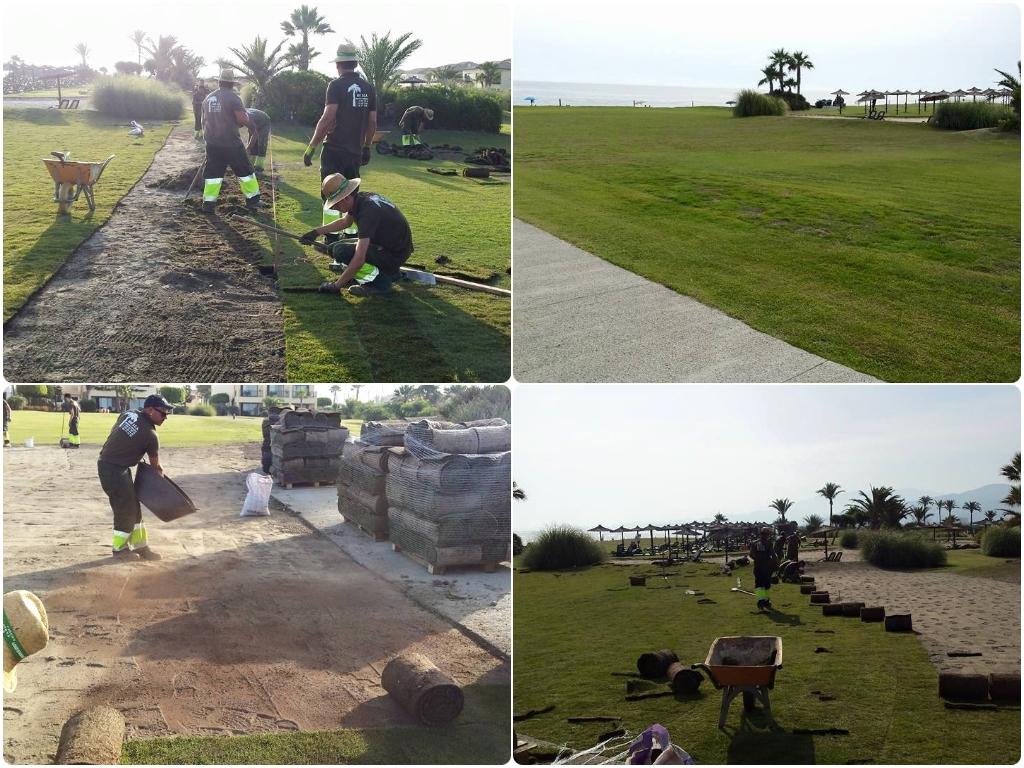 limpieza de palmeras en motril, limpieza de palmeras en salobreña, limpieza de palmeras en almuñecar