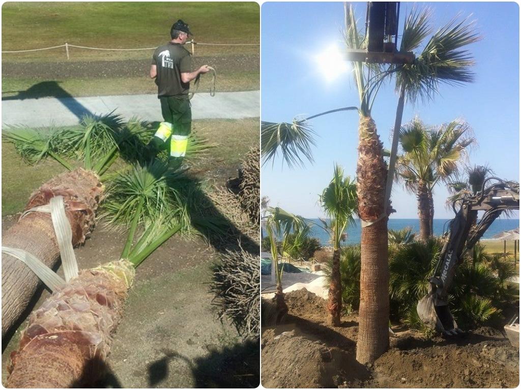 mantenimiento de piscinas en almeria, mantenimiento de piscinas en torrenueva,