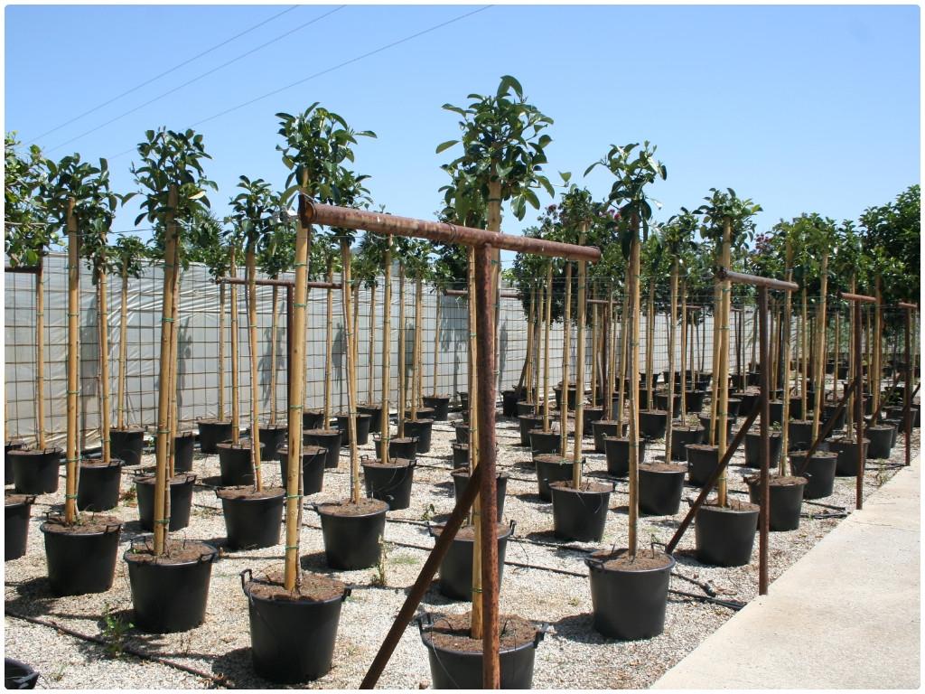 arboles frutales en malaga, arboles frutales en granada, arboles frutales en almeria