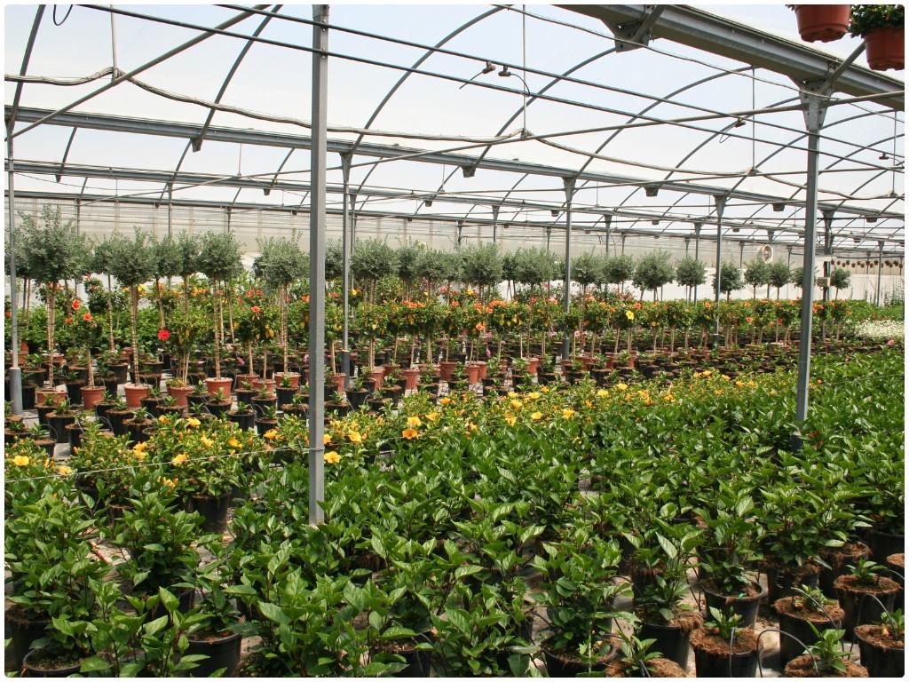 plantas en motril, plantas motril, plantas en salobreña, plantas en almuñecar, plantas en granada