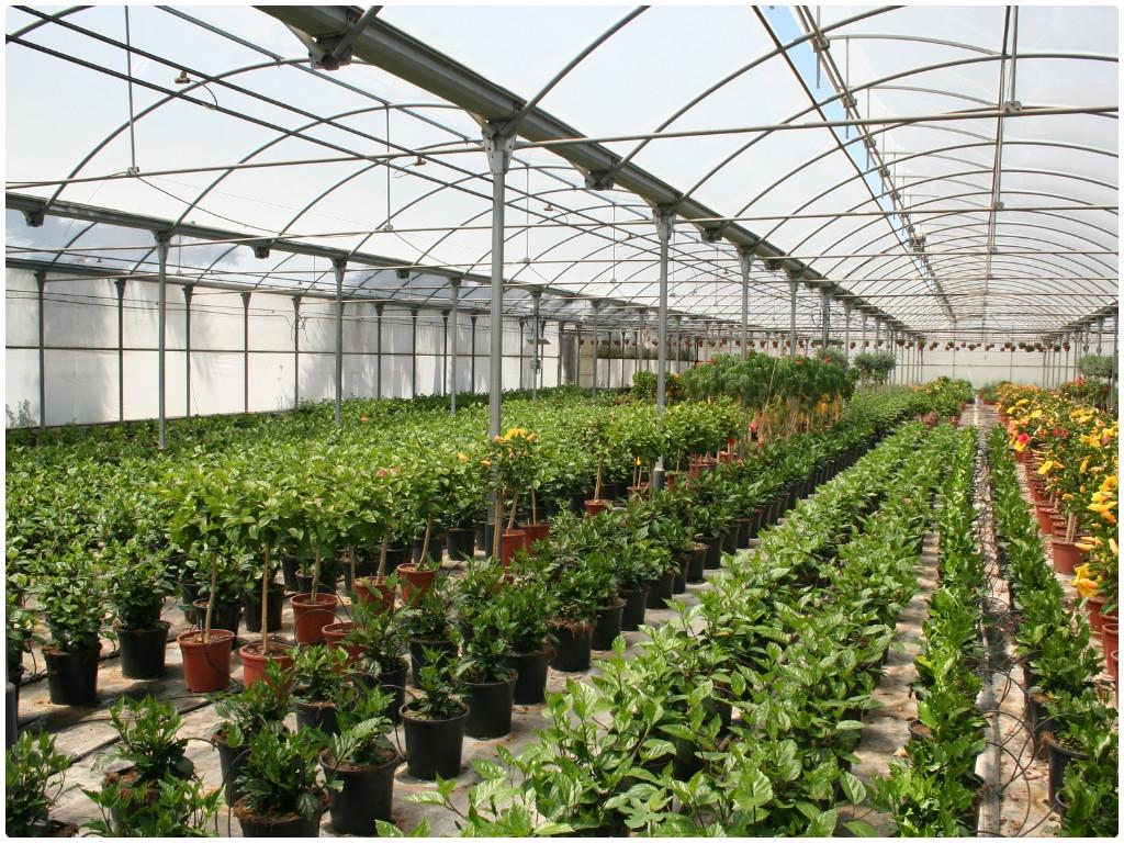 plantas en la herradura, plantas de exterior en motril, plantas de interior en motril,