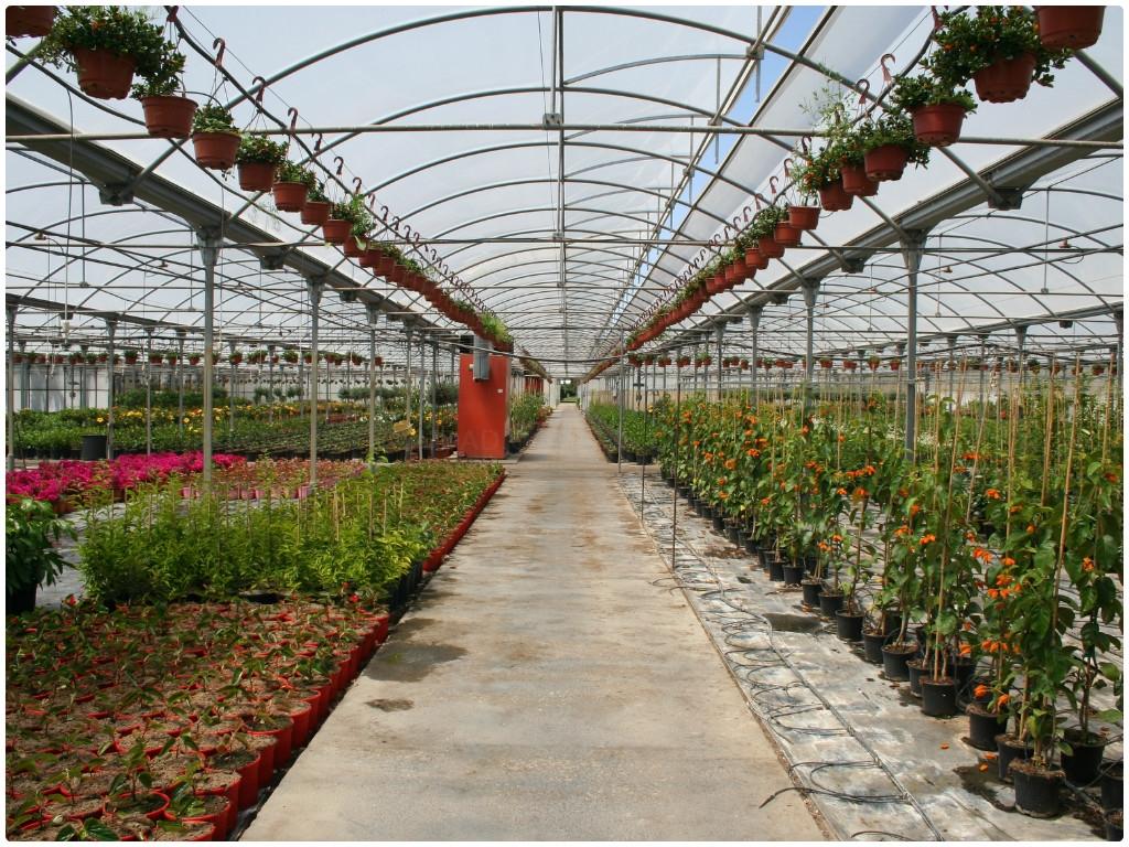 plantas trepadoras en almuñecar, plantas trepadoras en castell de ferro, plantas trepadoras motril