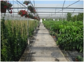 plantas trepadoras en motril, trepadoras en motril, plantas trepadoras en salobreña,