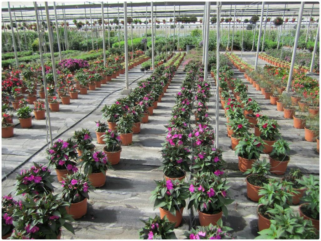 Centros de jardineria