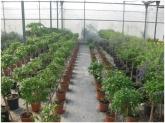 arbustos en motril, arbustos motril, arbustos en salobreña, arbustos en almuñecar,