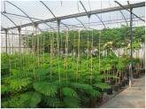 arbustos en granada, arbustos en la costa tropical de granada, arbustos en la herradura,
