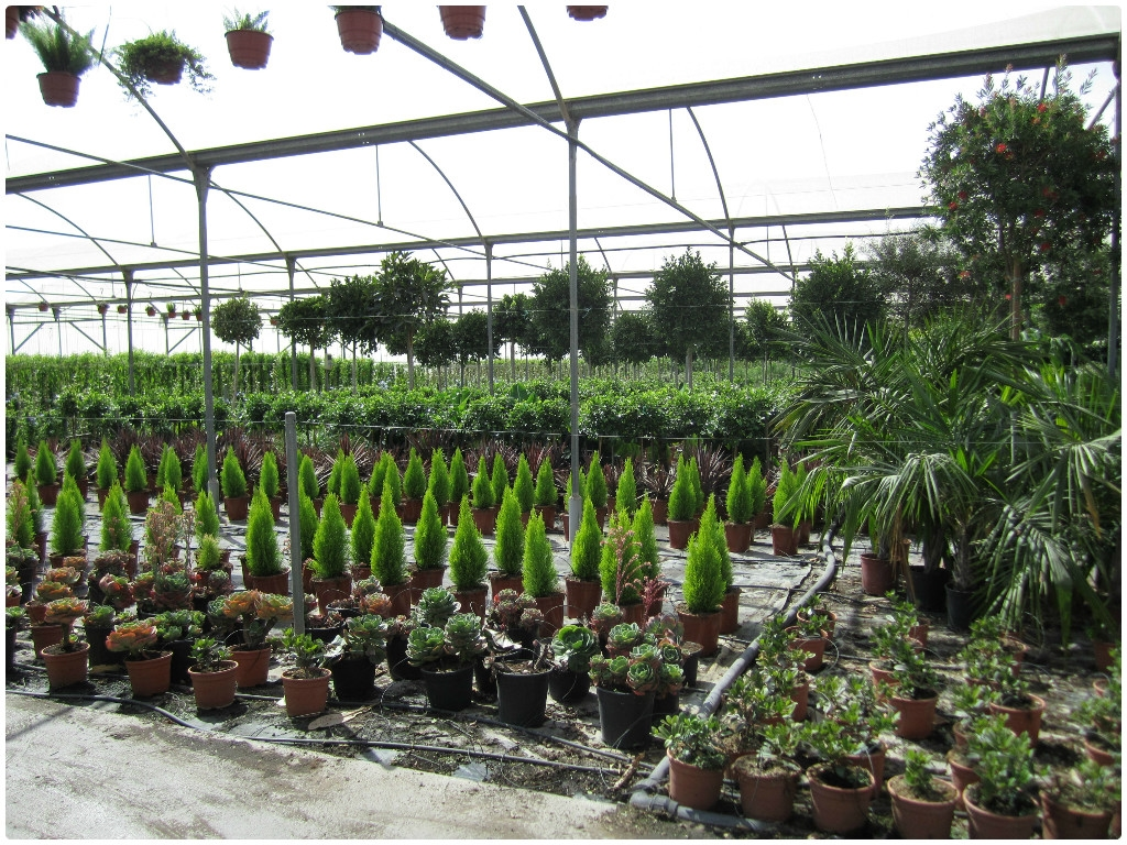 Viveros, centros de jardinería en Motril