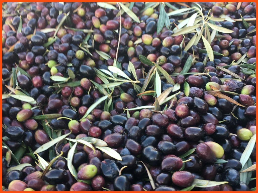 agricultura ecologica en salobreña, herbicidas en salobreña, polinizacion en salobreña