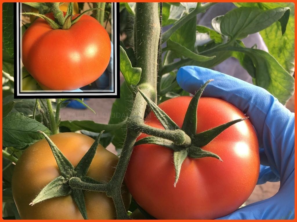 productos fitosanitarios en motril, productos fitosanitarios en almuñecar,