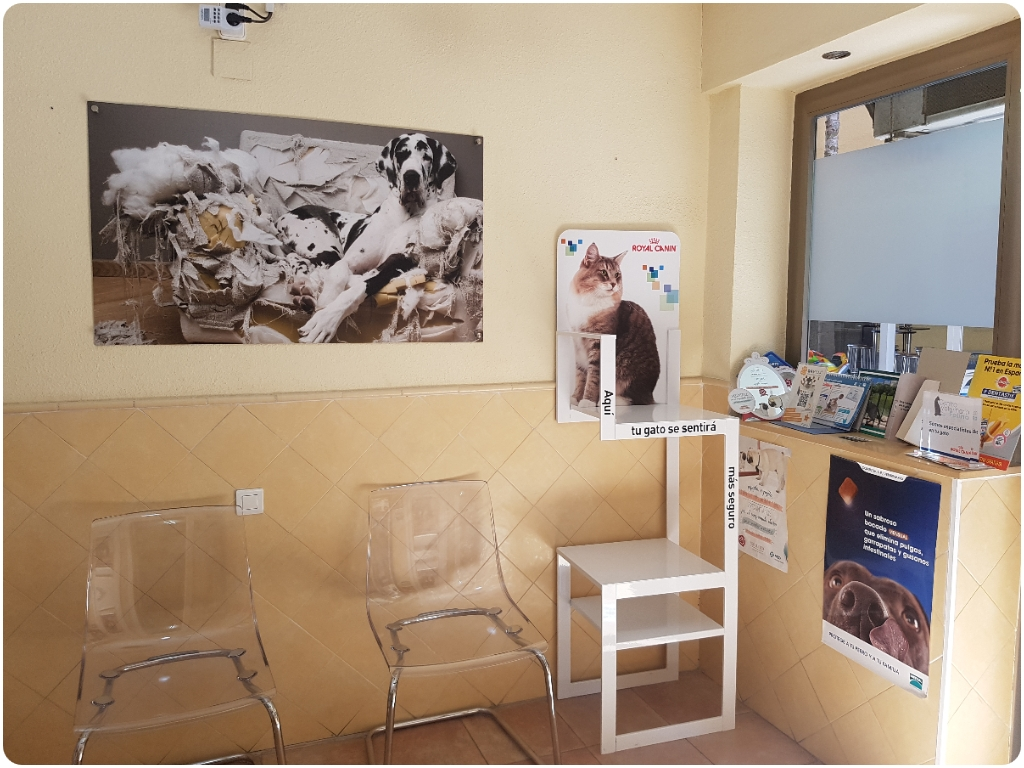 clinica veterinaria kelibia almuñecar, clinica veterinaria en almuñecar, veterinarios almuñecar