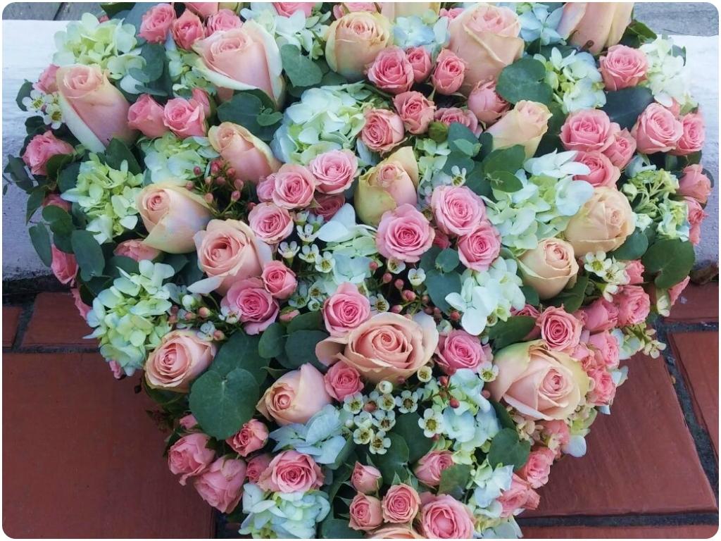 rosales en almuñecar, claveles en almuñecar, cactus en almuñecar, plantas en almuñecar,