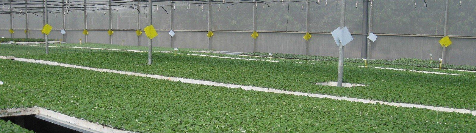 Semilleros Horto Plan  S.L., semilleros horto plan en motril, semilleros en motril, viveros motril,
