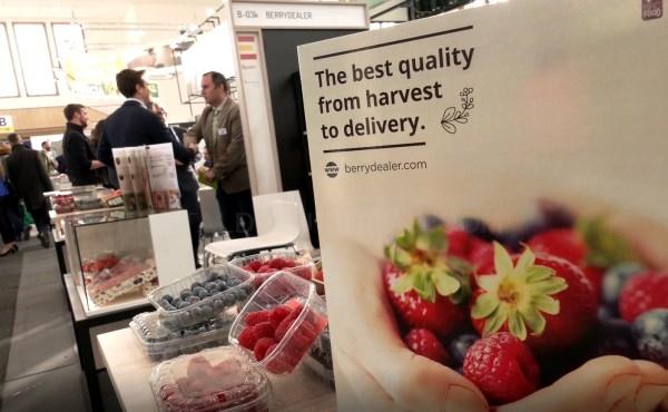 Récord de exportaciones de frutos rojos de Andalucía, con 475 millones en el primer trimestre de 2020 y un crecimiento del 7,6%