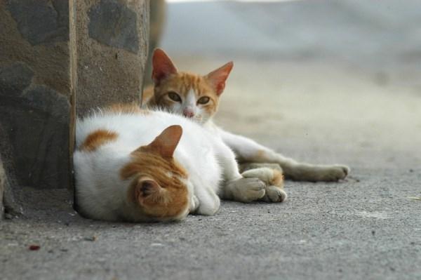 Abierto el plazo para que los municipios soliciten la subvención de Diputación para la protección y cuidado de animales