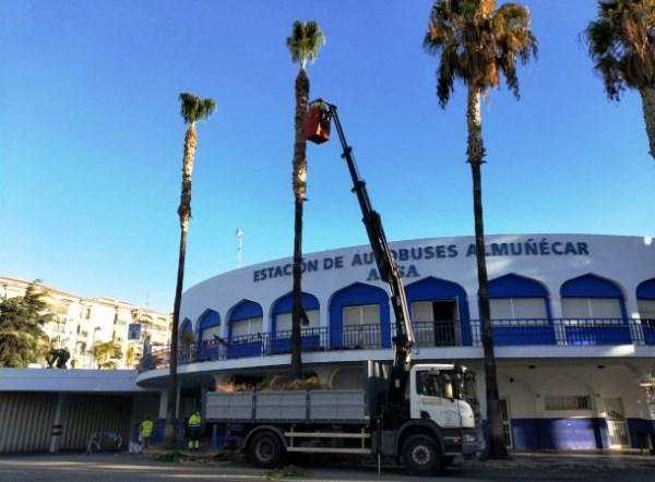 La campaña de limpieza de palmeras continúa en la Estación de Autobuses de Almuñécar