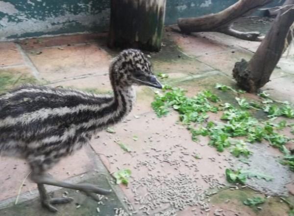 """Dos nuevos ejemplares de Emus en el parque """"Loro Sexi"""" de Almuñécar"""