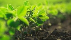 Se incorpora un Comisionado de Cambio Climático y Agenda 2030 para el desarrollo sostenible.