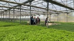 La Comunidad de Madrid lleva a cabo en la Finca 'La Isla' semilleros de diferentes especies hortícolas para su posterior venta.