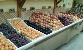 verdulerias  alicante ,  fruterias y verdulerias alicante