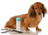 Animales en Alicante, Comprar mascota en Alicante