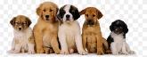 Peluquerías caninas, Animales de compañía