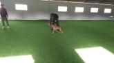 educación, Lenguaje canino