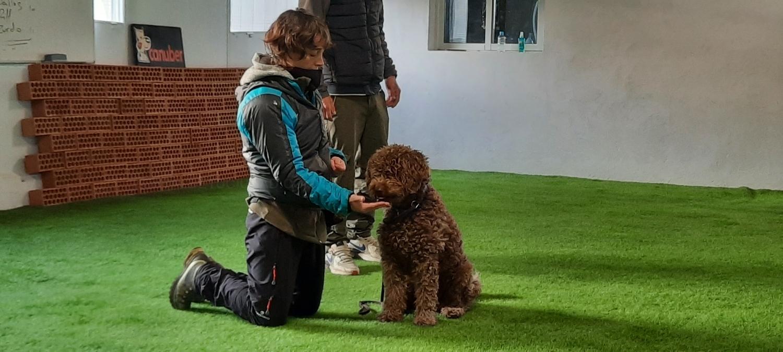 Adiestrador de perros Valladolid, modificacion de conducta de mi perro