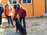 Curso para cachorros, educar a mi perro a no ladrar,pastor aleman de trabajo