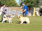 Adiestrador de Perros en Valladolid,canino,educacion,educar