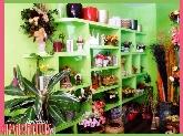 Floristeria en parquesol, floristeria amarantus, floristeria en valladolid, flores,