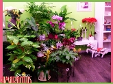 floristeria en parquesol, floristeria amarantus, floristeria en valladolid, decoracion interiores